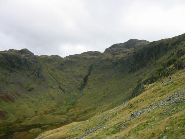 Comb Gill and Comb Head