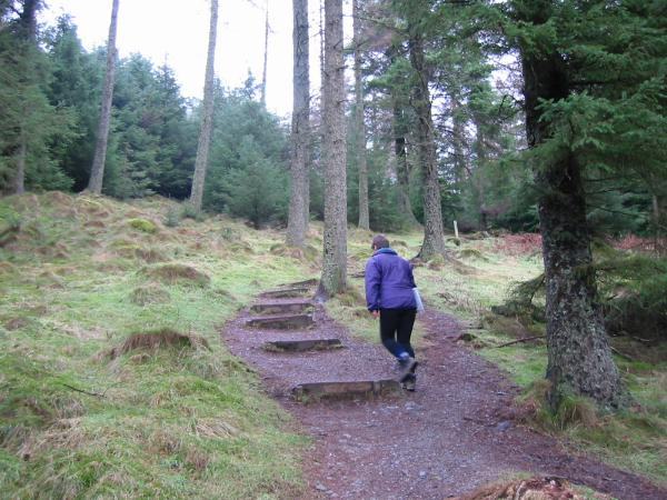 Walking through Whinlatter Forest