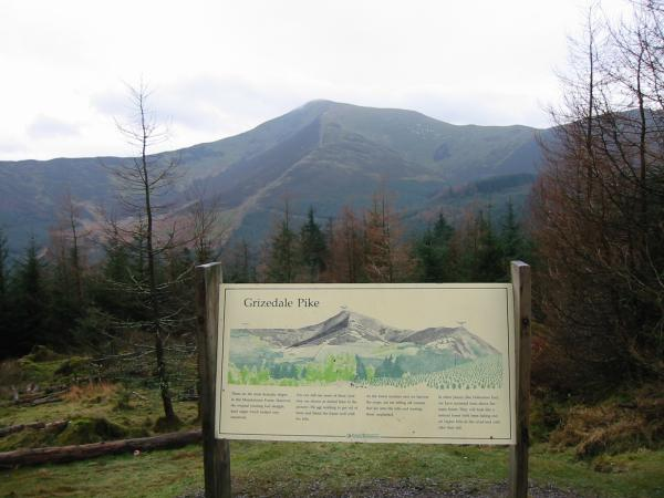 Grizedale Pike from a view point in Whinlatter Forest