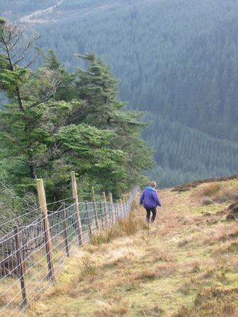 Descending back down to the stile to re-enter Whinlatter Forest