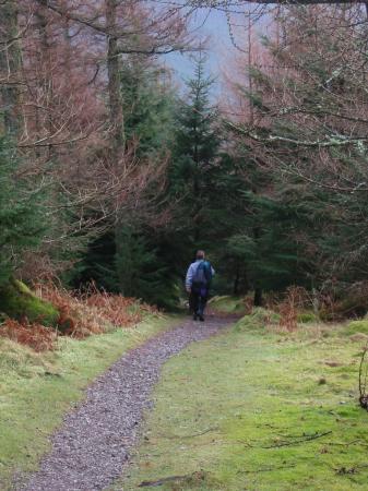 Forest path, Whinlatter