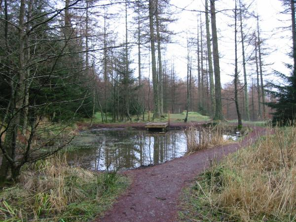 Pond near the Visitor Centre, Whinlatter