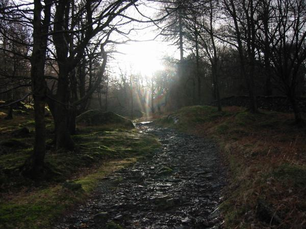 A track through the woods, Holme Fell