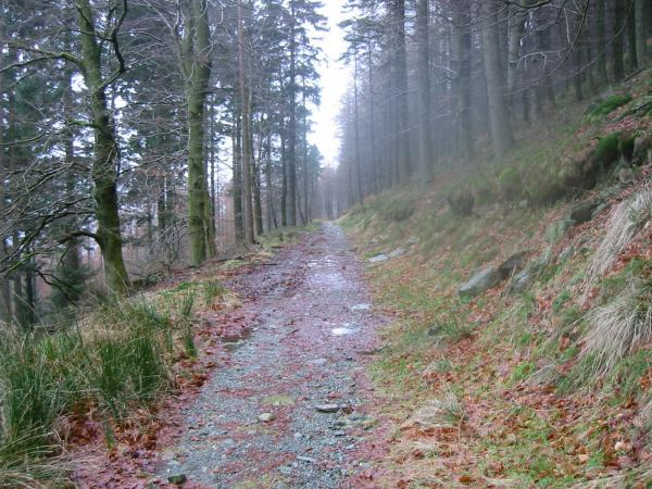 The forest track
