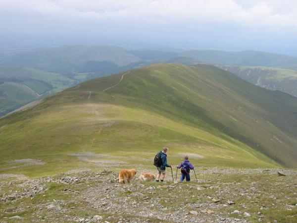Descending Grisedale Pike's north ridge to Hobcarton End