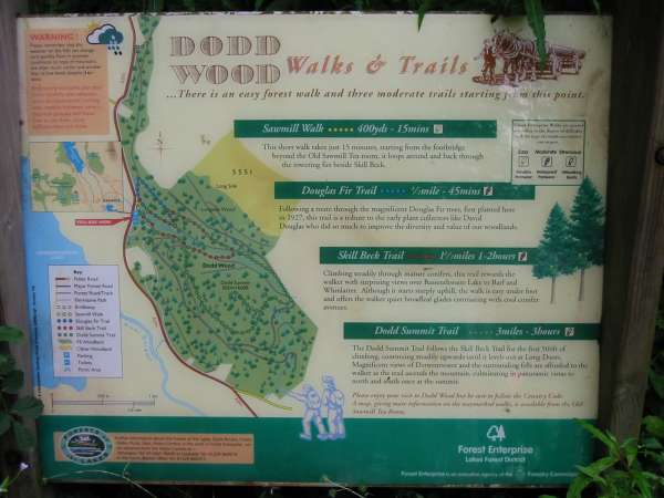 Dodd Wood's information board