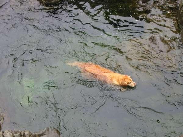 Holly taking a swim