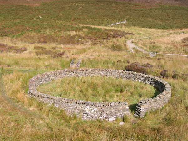 Circular sheepfold, Wiley Gill