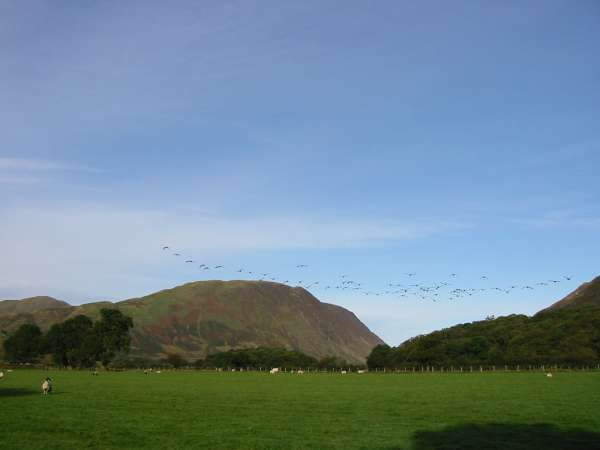 Geese flying towards Mellbreak
