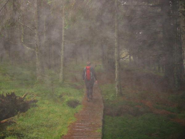 Boardwalk in Thornthwaite Forest