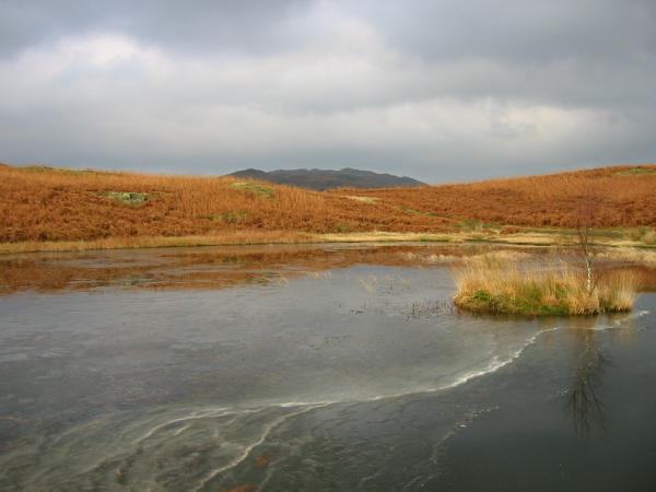 A partly frozen Lily Tarn