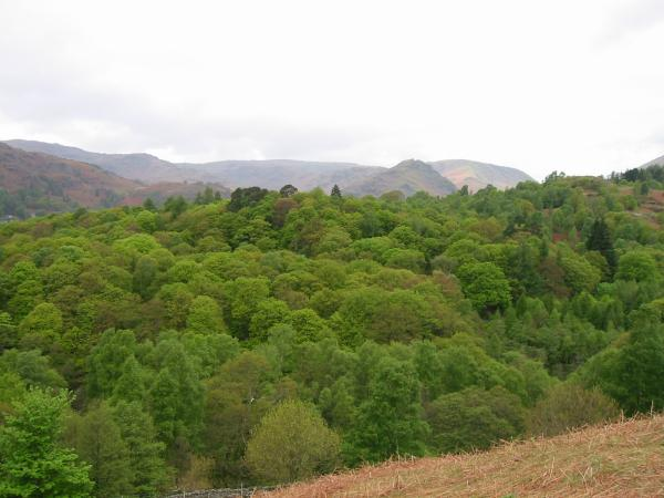 Baneriggs and Helm Crag