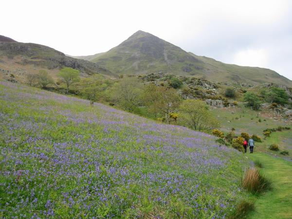 Whiteless Pike and the Rannerdale Bluebells
