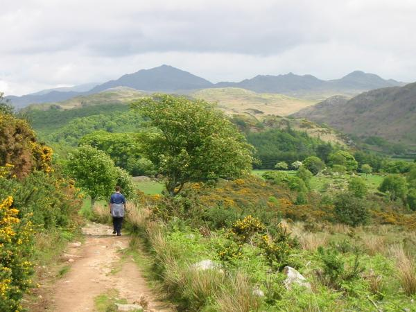 The skyline: Harter Fell, Crook Crag and Green Crag