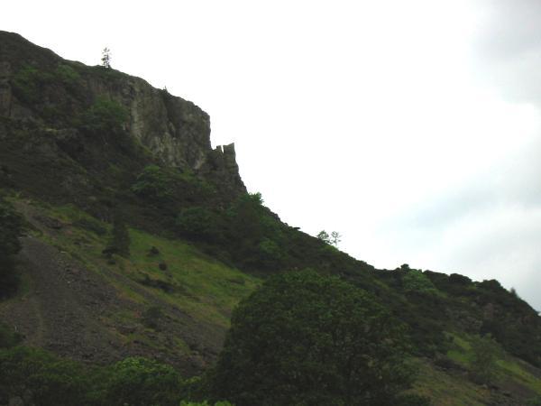 Oak Howe Needle