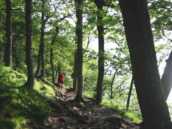 The path through Hallinhag Wood