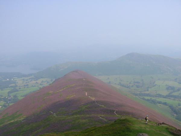 A heather covered Rowling End and Catbells