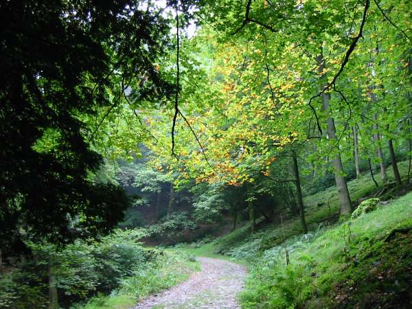 The path through Deerbolts Wood