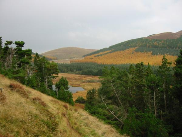 Looking back down the path to Cogra Moss