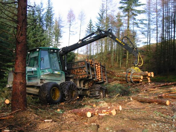 Forestry work in Iron Keld Plantation