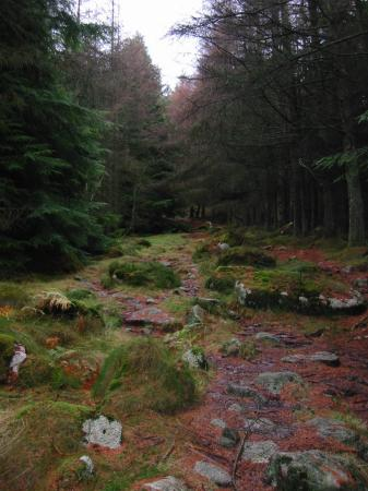 The path through the upper woodland