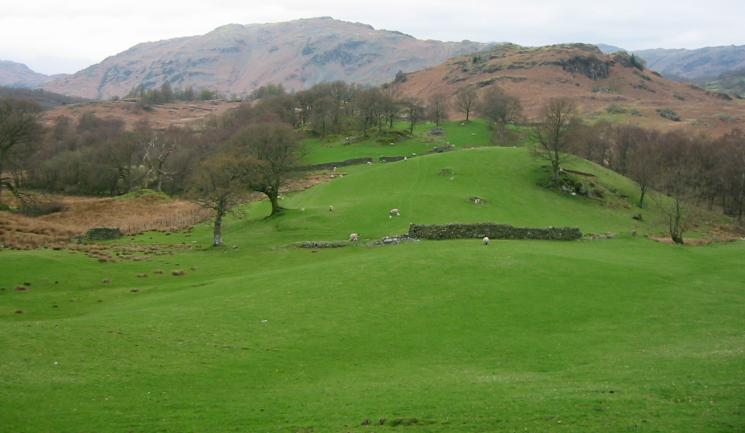 Green fields near High Oxen Fell with Lingmoor Fell behind