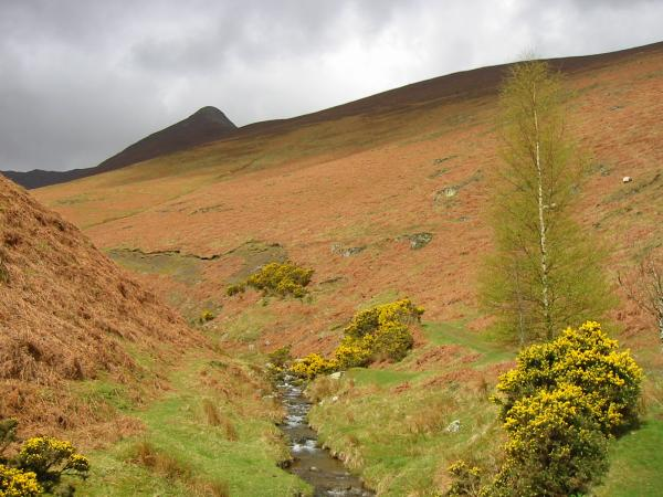Causey Pike from Rigg Beck