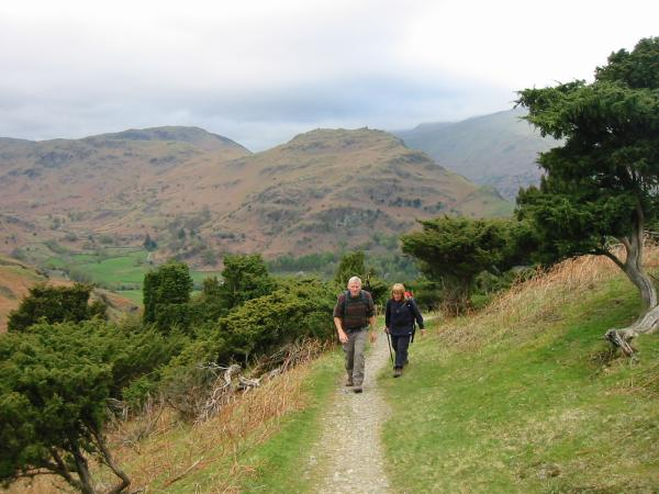 The path up through the Juniper with Helm Crag behind