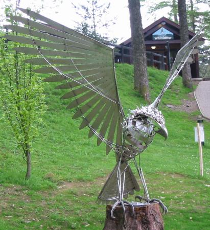 The new Osprey sculpture at Whinlatter Forest Visitor Centre