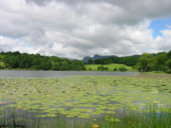 Looking across Loughrigg Tarn to the Langdale Pikes