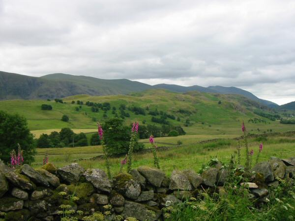The High Rigg ridge with the Helvellyn ridge behind from near Goosewell Farm