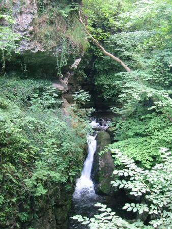 Part of the limestone gorge that Whelpo Beck flows through