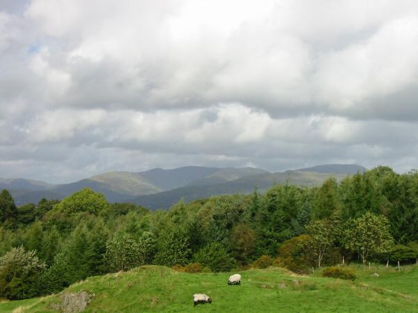 The Fairfield Horseshoe and Red Screes from Brant Fell