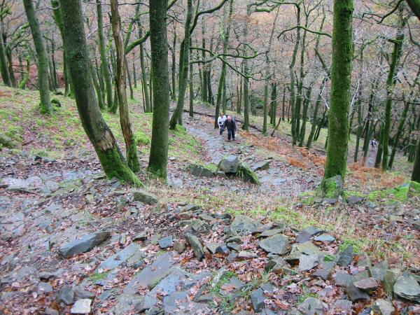The steep pitched path up through the woods above Stonethwaite