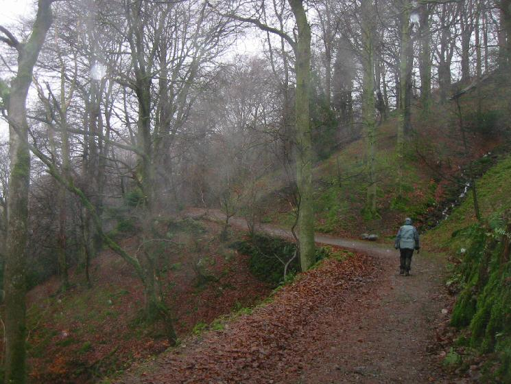 Track through Deerbolts Wood