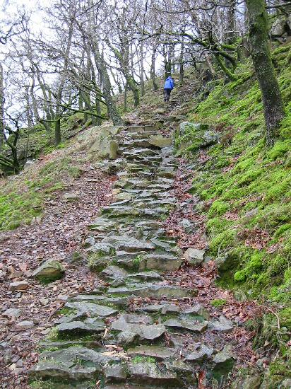 The steep pitched path up through the woods to Lingy End