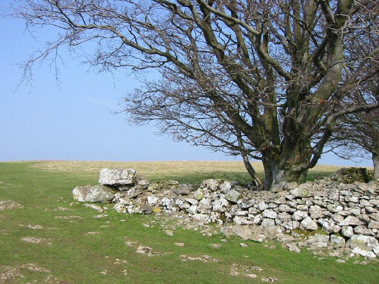 Corner of the wood near Heughscar Hill summit