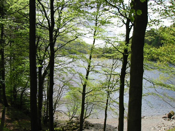 A glimpse of Thirlmere through the trees