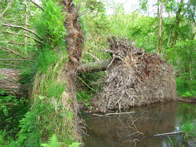 Storm damage, The Ings