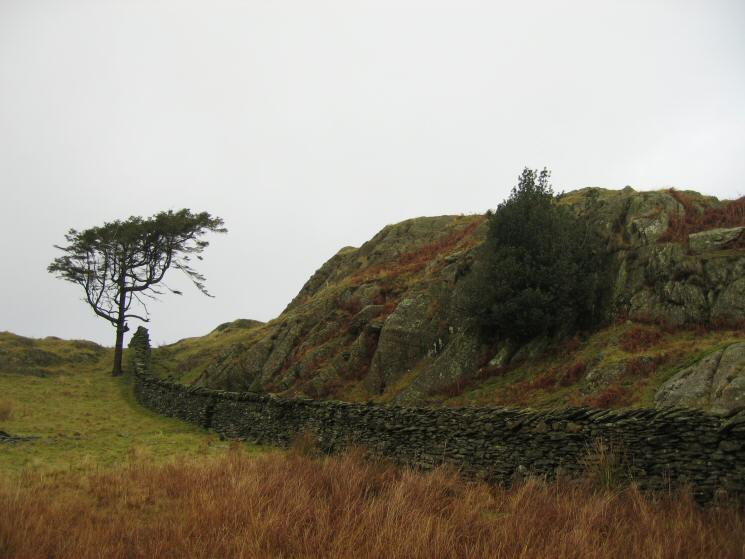 Wainwright's conspicuous tree, next to the wall