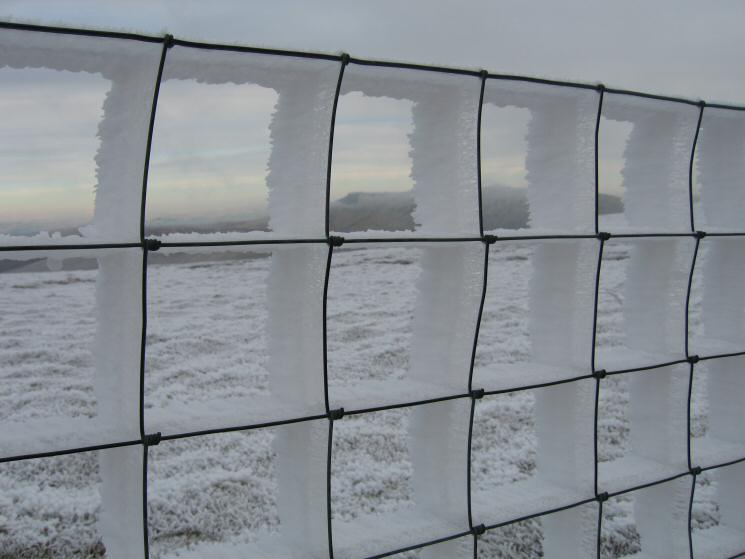 Lots of ice on the fence!