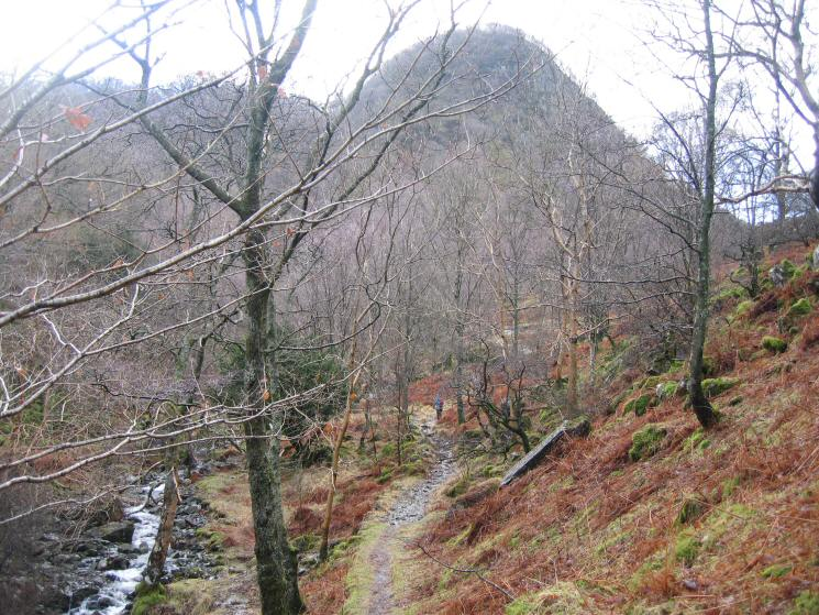 Path through the woods with Greatend Crag ahead