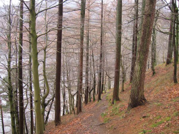 The permissive path through Greathow Wood