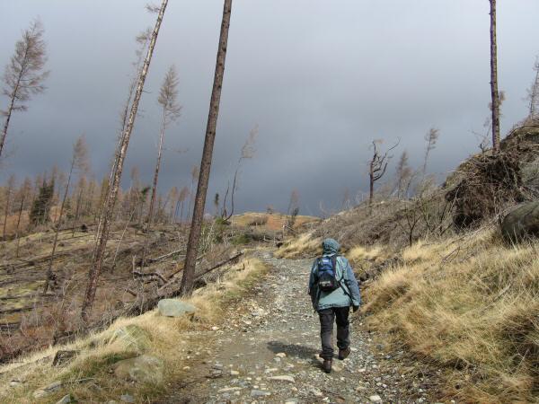 The path through what was Iron Keld Plantation