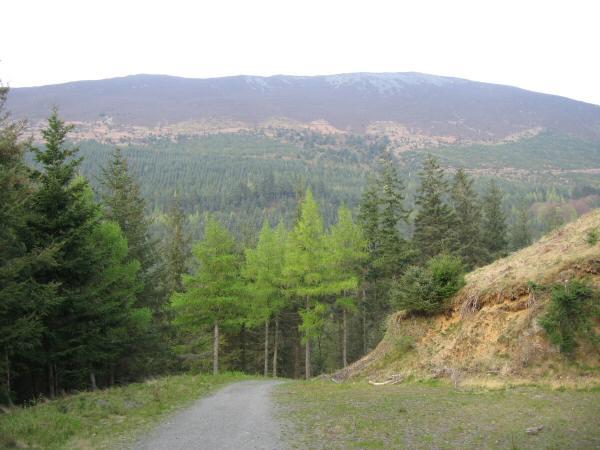 The slopes of Longside Edge from Dodd Wood