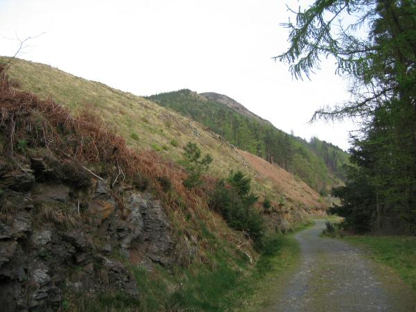One of the forest tracks in Dodd Wood, Dodd's summit is hidden from view behind the high point on the skyline