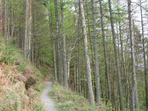 Path in Dodd Wood