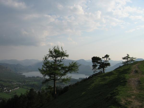 Latrigg's summit trees