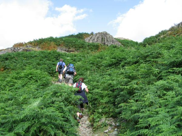 The path climbs up through the bracken