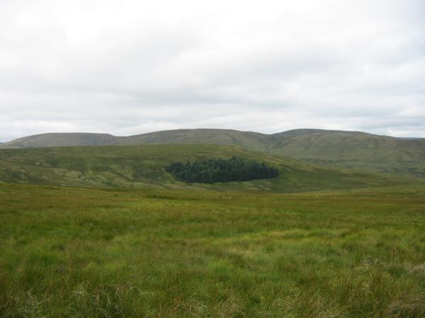 Looking over Brunt Tongue to Branstree, High Howes and Selside Pike